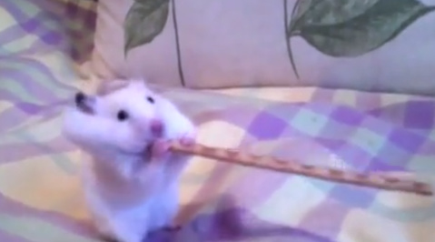 Hamster, Kinder, Youtube
