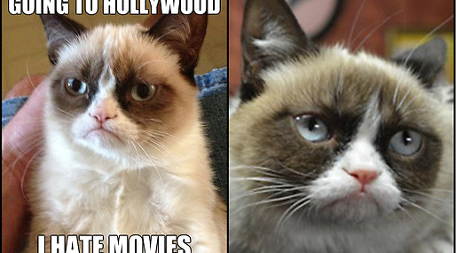 Internet, Kändis, Hollywood, Kat, Grumpy Cat
